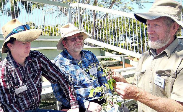 HELP: John McCabe, of DERM, identifies local weed species at last year's small landholders' day.