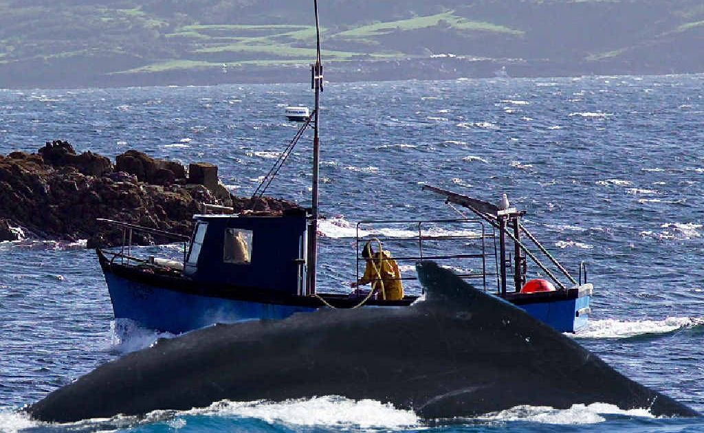 A boatie has been reported for getting too close to whales in a bid to photograph them. We reckon the boatie should back off!