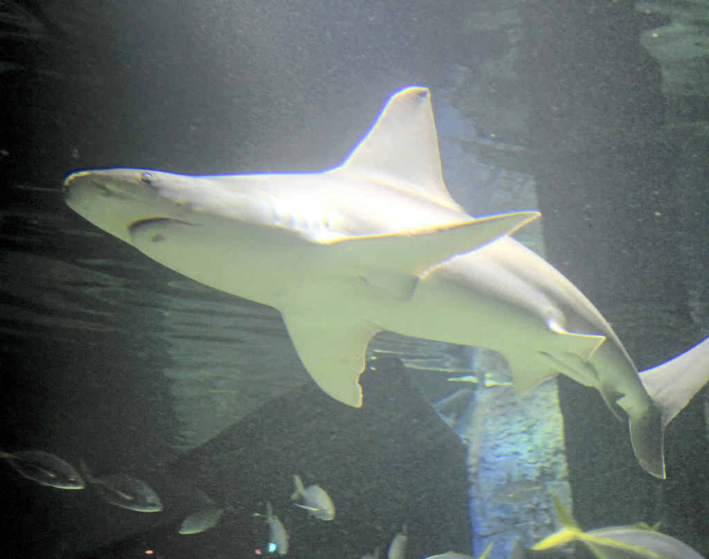 The residents in Shark Shipwreck are mostly local animals.