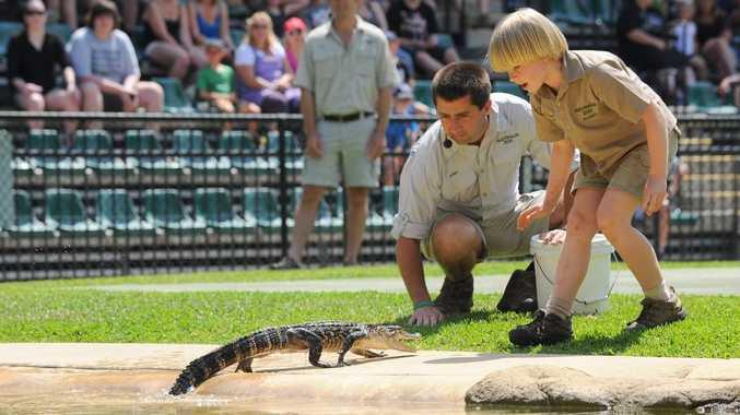 Robert Irwin feeds an American alligator during the croc show at Australia Zoo today. Photo: Ben Beaden/Australia Zoo