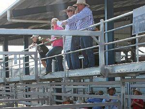 Prison mooves cattle on