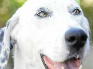 Bank staff choose animal charity
