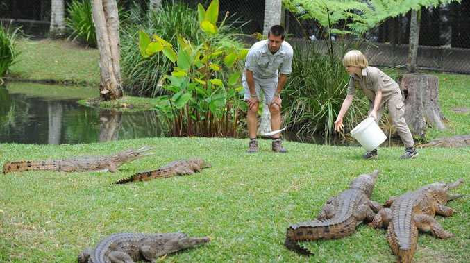 Robert Irwin, 8, makes his croc feeding debut at Australia Zoo.