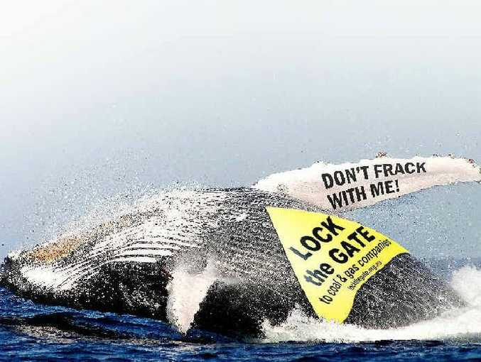 Whales could be harmed if an off-shore gas platform suggested by coal seam gas company Metgasco went ahead, a whale expert has warned.
