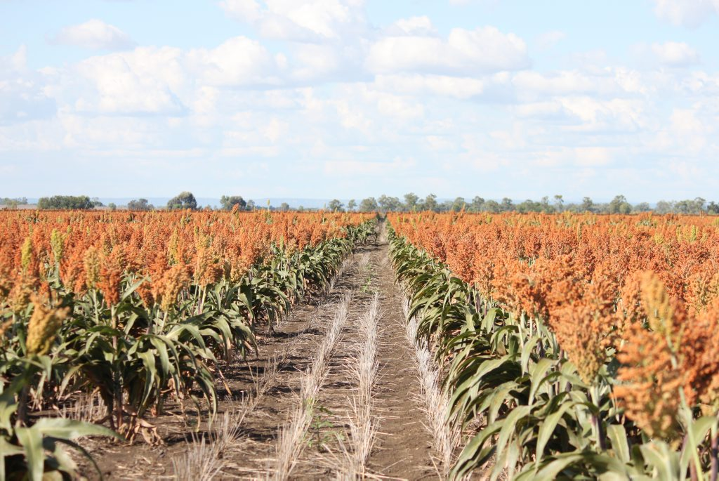 Dealing with drought will be a major focus of the Queensland Farmers' Federation in the coming year.