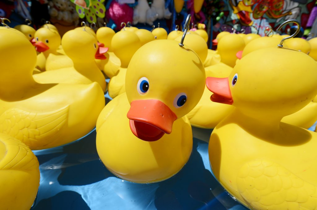 There will be 500 rubber ducks released