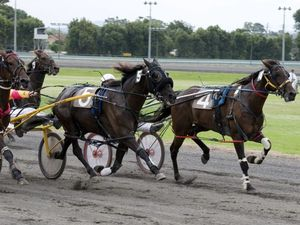 December restart for Toowoomba TAB harness racing
