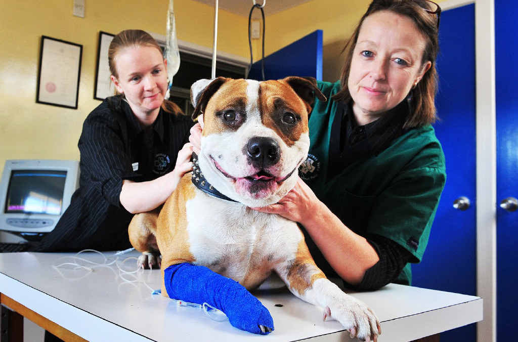 SURVIVOR: Dr Victoria Churchill and Dr Jenny McCleary from Silkstone Veterinary Surgery with Cooper, who was bitten by a red-bellied black snake.