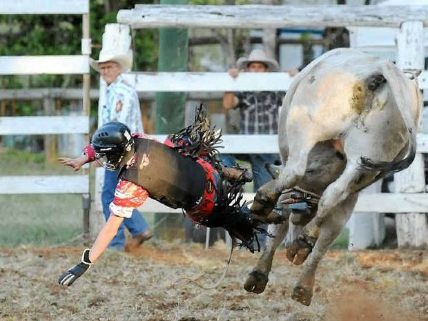 HE'S OFF: Wade Nicholson parts with his ride at the Apple Tree Creek Rodeo.