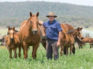 Darling Downs paddocks full of new foals