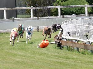 Border Park dog racing may jump over to Queensland rule