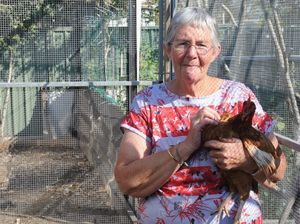 Chooks decapitated in backyard massacre in Maryborough