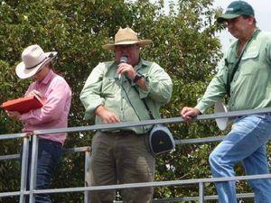 Mackay region cattle sales