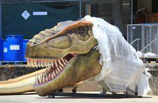 Palmer Coolum Resort reveals part of its first Dinosaur.