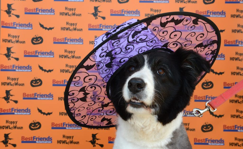 Maddie is looking to Halloween Photo: John Gass / Daily News