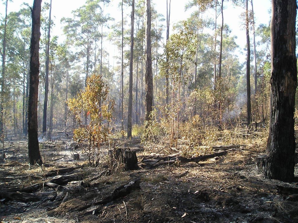 Backburning saved a sustainable forestry plantation near Toowoomba used by Ergon Energy to produce power poles.