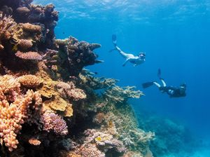 "Qld govt fights back against Barrier Reef ""misinformation"""