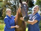 Gympie vets Sacha Woodburn and Justin Schooth yesterday welcomed the arrival of a vaccine for the deadly Hendra virus.