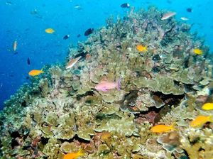 Protecting the Great Barrier Reef could cost economy: QRC