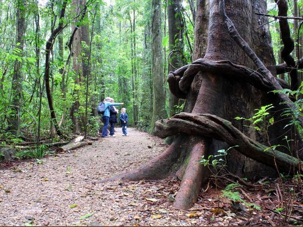 The beautiful environment of Mary Cairncross Scenic Reserve.