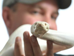 Scales and Tails publisher Troy Kuligowski with an albino olive python.