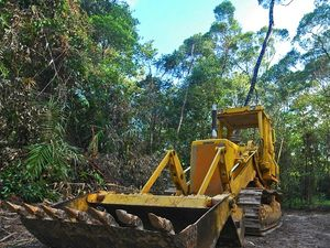 Rescuing a world heritage rainforest from developers