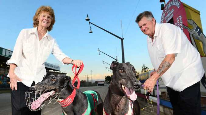 IPSWICH BOOST: Greyhound enthusiasts Beverley Chappell (with her runner Mrs Bonteen) and Peter Wilson (with Wild Surfer) welcome the return of Saturday night racing.