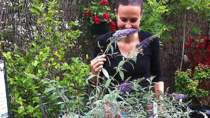 IN A FLUTTER: Chelsea loves the idea of having butterflies in her garden.