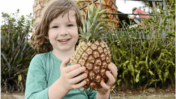 IN GOOD HANDS: Three-year-old Lachlan Fleming is a big fan of the revived Big Pineapple's Saturday markets.