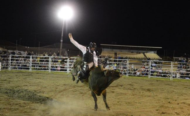 Lawrence cowboy Shane Want rides the feature bull event 'Hot Shot' during the Jacaranda Rodeo at the Grafton Showground on Saturday night. Photo Debrah Novak / The Daily Examiner