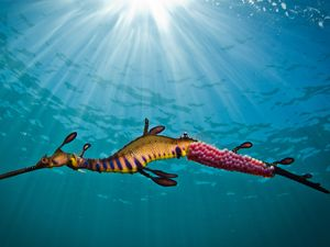Seadragon image wins photography prize for marine educator