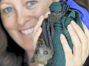 Bat lovers show anger over issuing of shooting permits