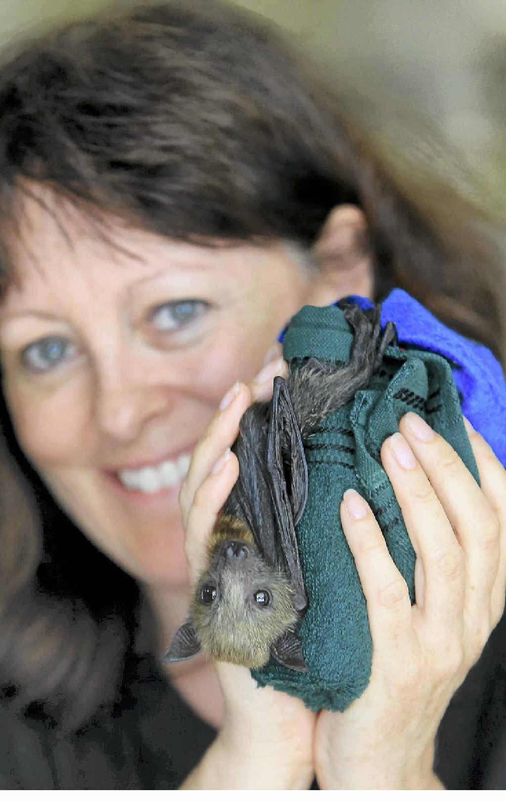 CRUEL PRACTICE: Sylvia Hood is against culling animals like Ginny, a 24-day-old grey headed flying fox.