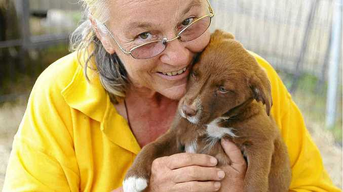 HELP NEEDED: Sally Rogers, of Happy Paws Haven, with a puppy.Photo JoJo Newby