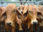 Premier spruiks North West beef during Tokyo trade trip