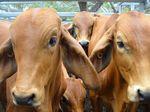 Farming lobby proposes working visa program changes