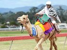 Camel races to return in 2013