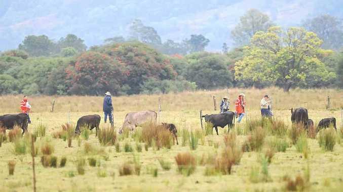 Air investigators search the scene at South Gundarimba, near the Coraki turnoff, where a light aircraft from the Gold Goast crashed.