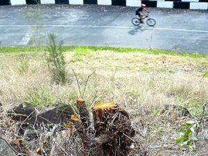 Noosa car club defends tree axing at national park road