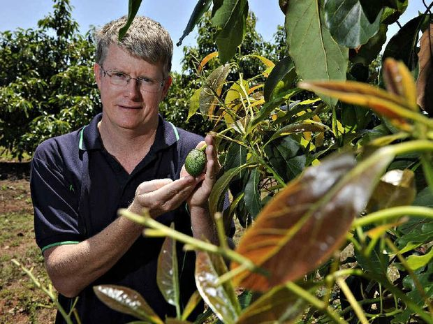 ALL GOOD: Simpson Farms director John Walsh is happy the farm has won a premier's export award.