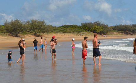 SHARK WATCH: A group of spectators gathered to watch and take photos of a pack of sharks that closed Agnes Water's main beach
