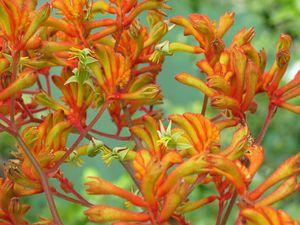 Tips to help plan your garden against bushfire risk
