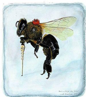 TOP: Origin of the Species by Scott Trevelyan.ABOVE: Bee'n a Tough Day Honey! by Scott Trevelyan.