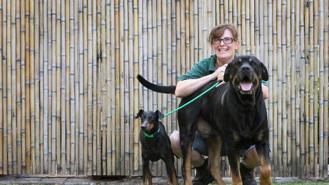 Rebecca Corr from Sunshine Coast Animal Refuge with Harley the terrier and Rocky the rottweiler. The pair desperately need a new home after being at the refuge for 6 months now. Photo: Brett Wortman / Sunshine Coast Daily