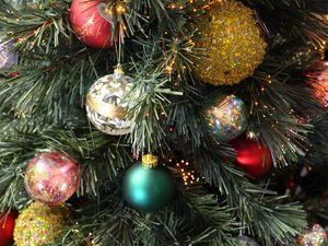 Northern Rivers Christmas trees