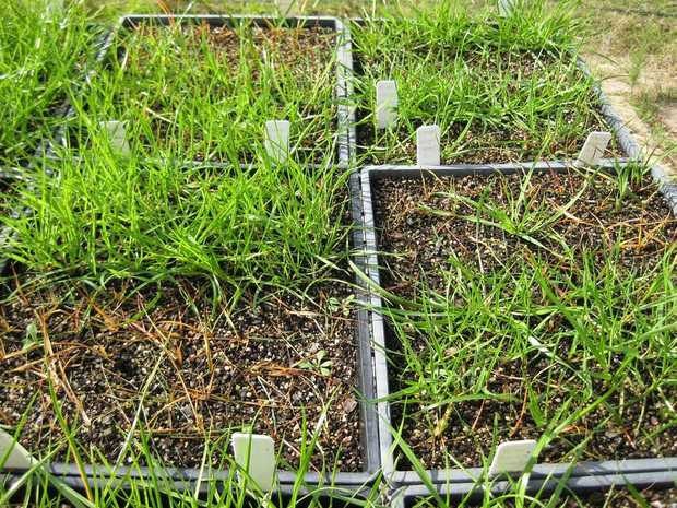 Growers are being urged to make sure the seed they keep for subsequent plantings is free from weed seed.
