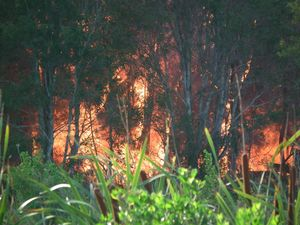 Expert advice on what to do if you're caught in a bushfire
