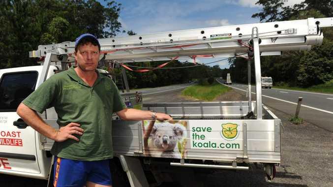 Sunshine Coast Koala Wildlife Rescue has struggled for five years and needs urgent financial help.