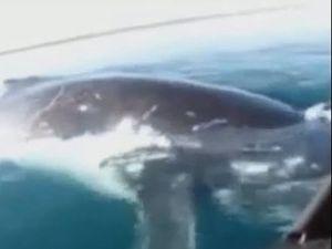 'Don't knock us over' girl in canoe tells whale off Fraser