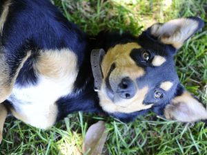 Breeders' permits for cats, dogs among proposed changes